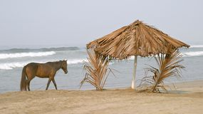 Cheval et palapa sur la plage Photos libres de droits