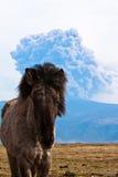 Cheval et volcan islandais Images stock