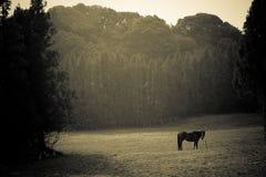 Cheval et zone Image libre de droits