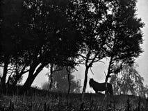 Cheval fantasmagorique image libre de droits
