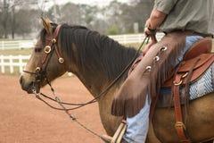 Cheval fonctionnant Photographie stock libre de droits