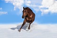 Cheval fonctionnant dans la neige Image stock