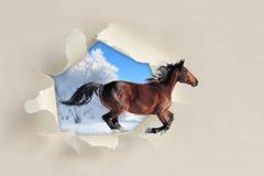 Cheval fonctionnant par un trou déchiré le papier images stock