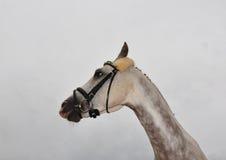 Cheval fou Photo stock