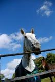 Cheval fou Photographie stock libre de droits