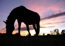 Cheval frôlant au coucher du soleil (silhouette) Image stock