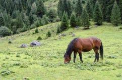 Cheval frôlant sur un pré d'alpe images libres de droits