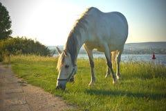 Cheval frôlant à côté du lac Image libre de droits