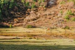 Cheval frôlant au pré en montagnes au jour ensoleillé Images libres de droits
