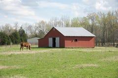 Cheval frôlant devant une grange Photographie stock