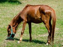 Cheval gentil sur l'herbe verte photo libre de droits