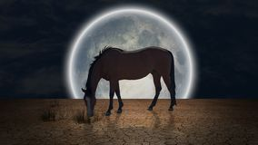 Cheval gracieux illustration stock