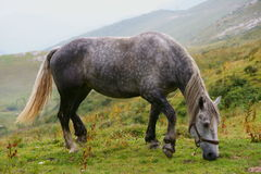 Cheval gris dans l'horizontal de montagne photos stock