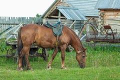 Cheval, herbe, vert, cheval, avec, courant, fatigué, mangeant, mangeant, mangeant, mangeant, élevage, fonctionnant, cavalier, côt Images stock