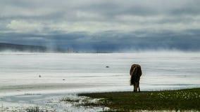 Cheval islandais sur Misty Shore Photo stock