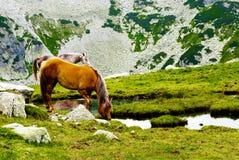Cheval libre Photographie stock