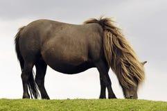 cheval Libre-vivant Image stock