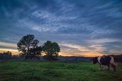 Cheval marchant à travers vers des arbres au crépuscule Image stock