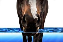 Cheval marchant par l'eau Images stock
