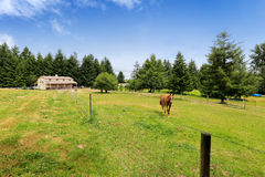 Cheval marchant sur le grand champ de ferme avec une grange Photo stock
