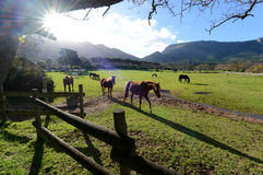 Cheval Meadww Cape Town images stock