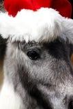 Cheval miniature d'étalon avec le chapeau de Noël Photographie stock
