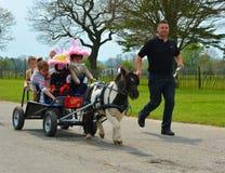 Cheval miniature tirant le chariot complètement des enfants Photographie stock libre de droits