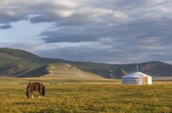 Cheval mongol dans un paysage de la Mongolie du nord images libres de droits