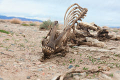 Cheval mort Image stock