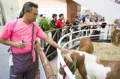 Cheval nain dans l'exposition de variété d'animal familier 2013 Images libres de droits