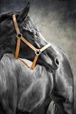 Cheval noir Photo stock