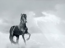 Cheval noir image libre de droits