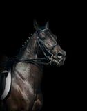 Cheval noir Photographie stock