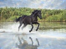 Cheval noir image stock