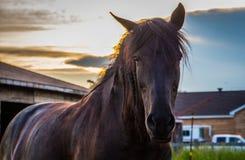 Cheval noir au coucher du soleil Image libre de droits