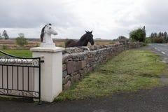 Cheval noir avec la statue de t?te de cheval images libres de droits