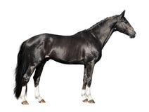 Cheval noir d'isolement sur le blanc Photo stock