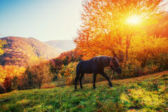 Cheval noir en montagnes carpathiens l'Ukraine, l'Europe Photographie stock