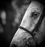Cheval noir et blanc photos stock