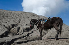 Cheval noir près de Volcano Bromo, Java, Indonésie Photographie stock libre de droits
