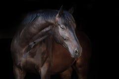 Cheval noir sur le noir photographie stock