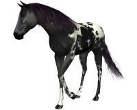 Cheval noir sur un fond blanc images stock