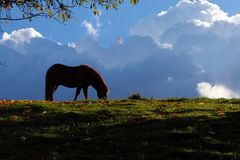 Cheval - nuages noirs Images stock