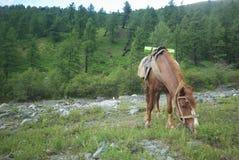 Cheval parmi l'herbe verte en nature Cheval debout d'isolement Pâturage des chevaux dans le village photos libres de droits