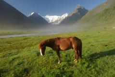 Cheval parmi l'herbe verte en nature Cheval debout d'isolement Pâturage des chevaux dans le village Photographie stock