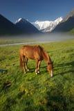 Cheval parmi l'herbe verte en nature Cheval debout d'isolement Pâturage des chevaux dans le village photo libre de droits