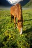 Cheval parmi l'herbe verte en nature Cheval debout d'isolement Pâturage des chevaux dans le village image stock