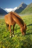 Cheval parmi l'herbe verte en nature Cheval debout d'isolement Pâturage des chevaux dans le village images libres de droits