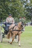 cheval pilotant le dressage de concurrence Photographie stock