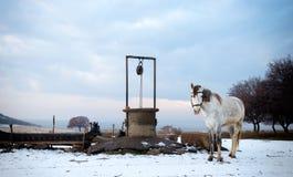 Cheval près d'une fontaine étant liée pieds photos libres de droits